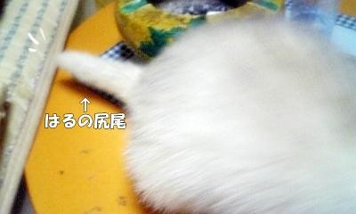 はるの尻尾☆