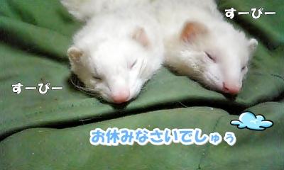 お休みなさーい☆
