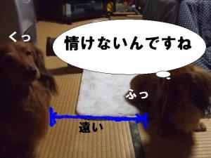 20070321233129.jpg