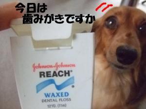 20070330110011.jpg