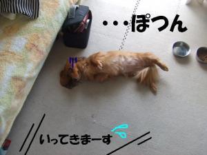 20070401194308.jpg