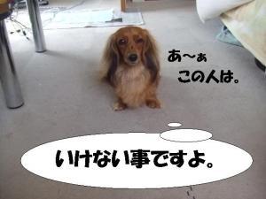 20070403212523.jpg