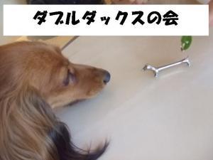 20070601213819.jpg