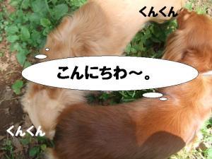 20070603204019.jpg