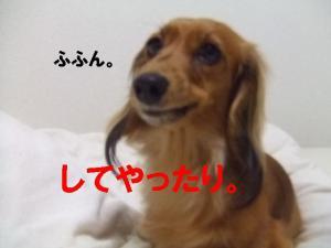 20070708194619.jpg