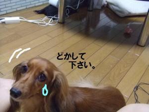 20070710220856.jpg