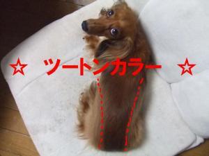 20070829113124.jpg