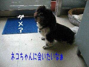 IMG_0684.jpg