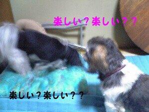 Image0174.jpg