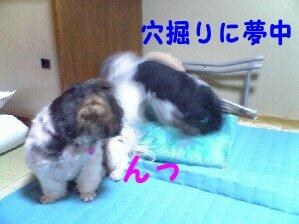 Image0175.jpg
