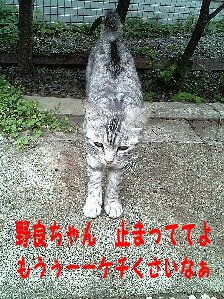 Image0178.jpg