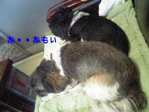 Image0246.jpg