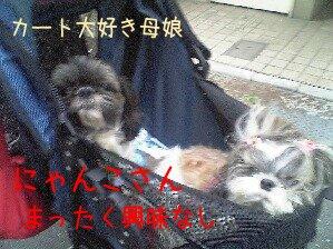 Image0258.jpg