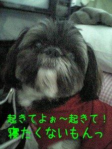 Image0290.jpg