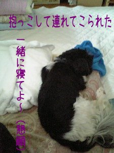 Image0293.jpg