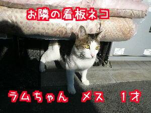 P1020378.jpg