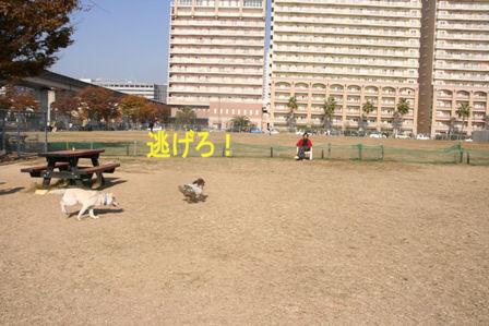 20071126094346.jpg