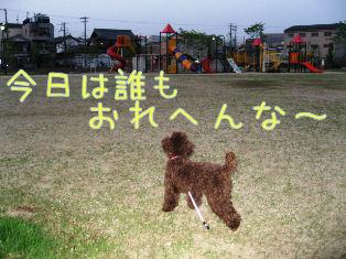 IMG_0533a.jpg
