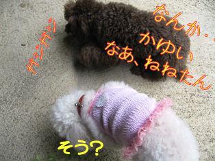 IMG_0630a.jpg