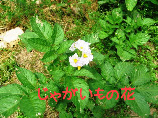 IMG_0640a.jpg
