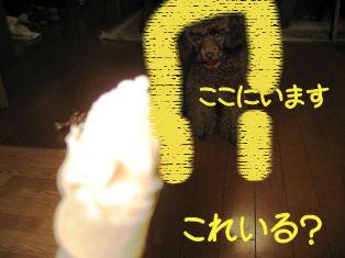 IMG_0680a.jpg