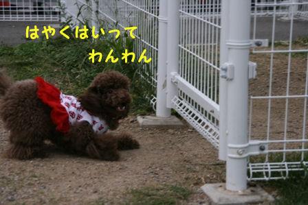 IMG_0924a.jpg
