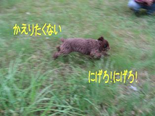 IMG_1031a.jpg