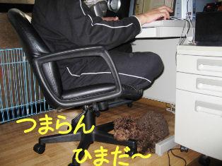 IMG_1114A.jpg