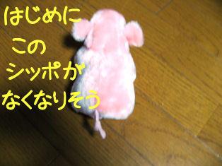 IMG_1146a.jpg