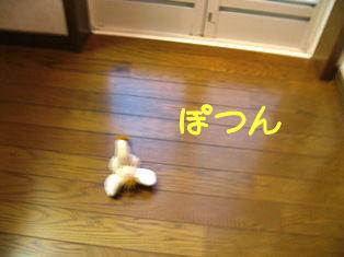 IMG_1172a.jpg