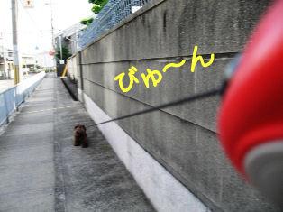 IMG_1181a.jpg