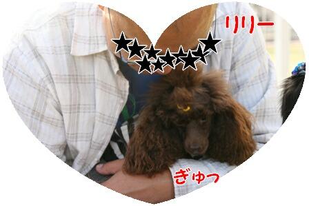IMG_1183a.jpg