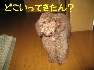 IMG_1214a.jpg