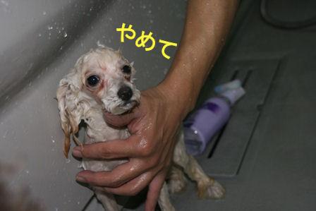 IMG_2169d.jpg
