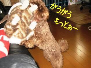 IMG_2550a.jpg