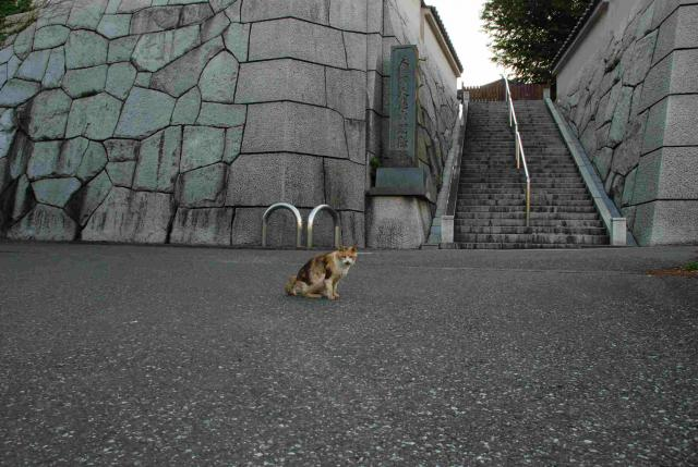 入間町の猫