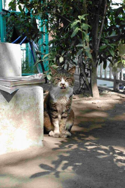 秋葉原の猫