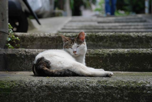 太子堂の猫