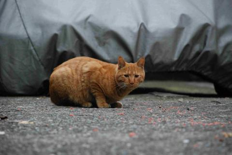 下落合の猫