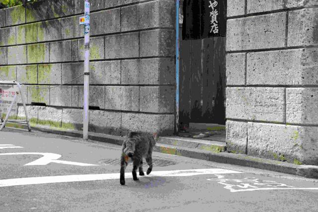 吉祥寺の猫