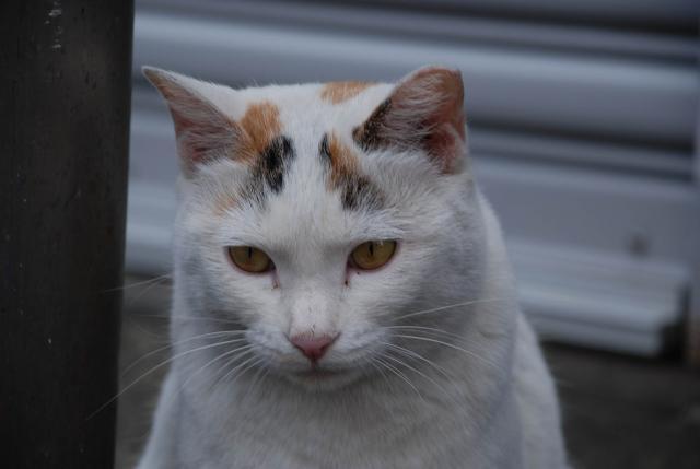 歌舞伎町の猫