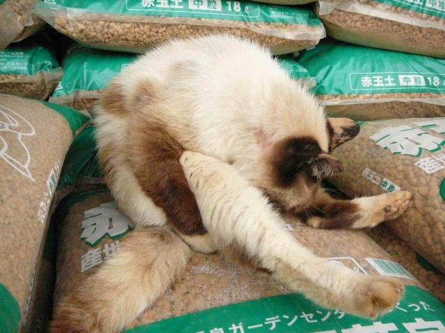 南大沢の猫