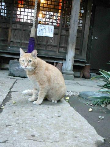 中目黒の猫