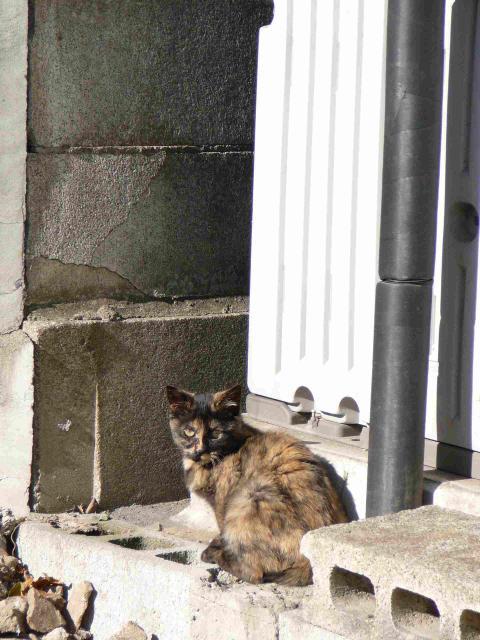 茨城県水海道駅の猫