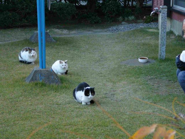 茨城県宗道駅の猫