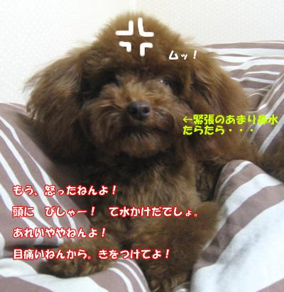 20070918123002.jpg