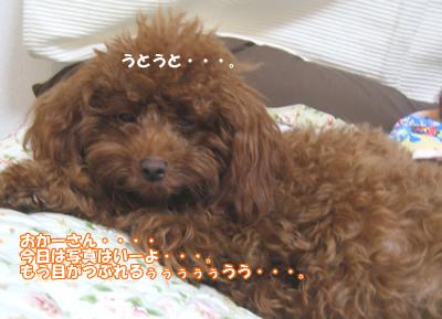 ブログ10・29 031259