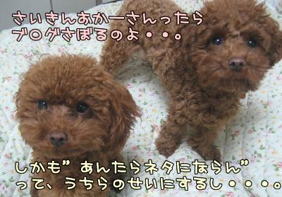 12.14blog 001253