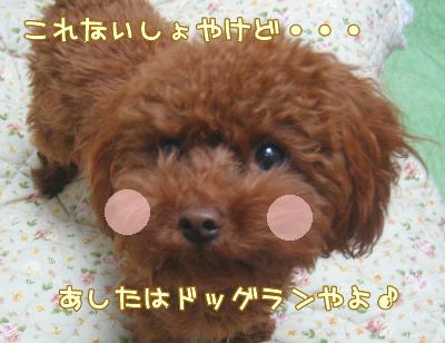12.14blog 0512545