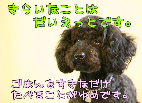 IMG_62103254.jpg